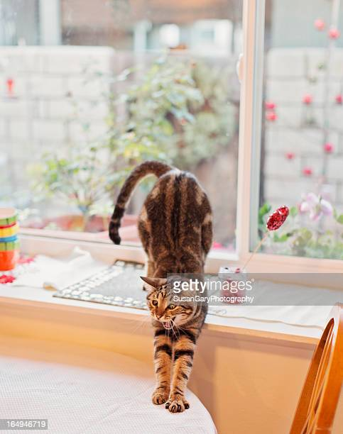 Kitten Does Morning Stretch