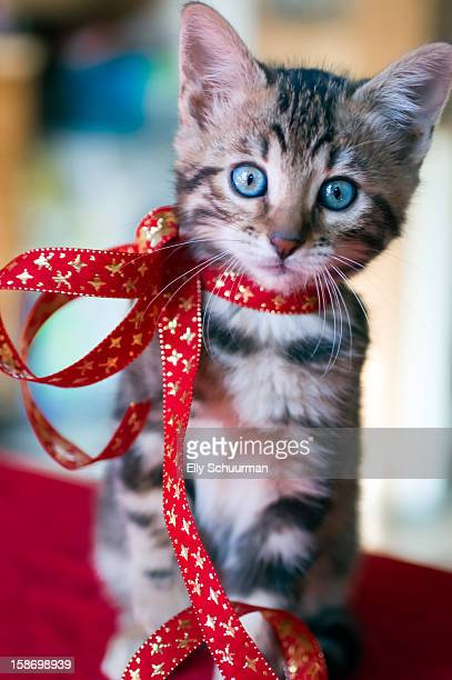 kitten for christmas - christmas kittens stock pictures, royalty-free photos & images