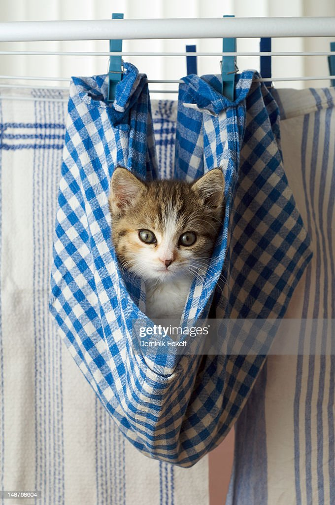 Kitten hanging on a washing line in a dishcloth : Stock Photo
