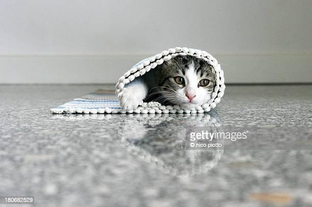 Kitten hidden in olled carpet