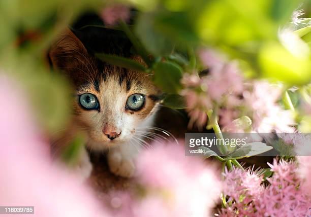 Kitten hiding behind flowers in the garden