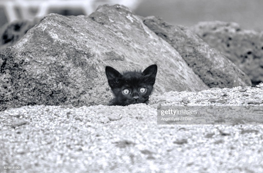 Kitten hiding behind rocks : Stock Photo