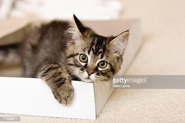 Chaton dans une boîte