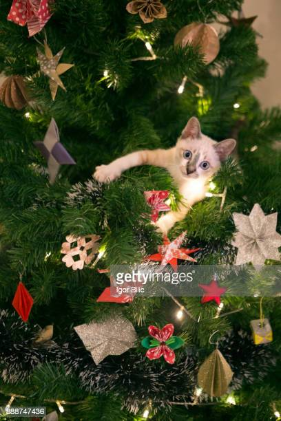 kitten in a christmas tree - cat family stock photos and pictures