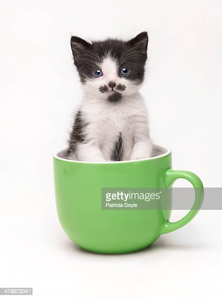 kitten in a cup - kitten stock pictures, royalty-free photos & images