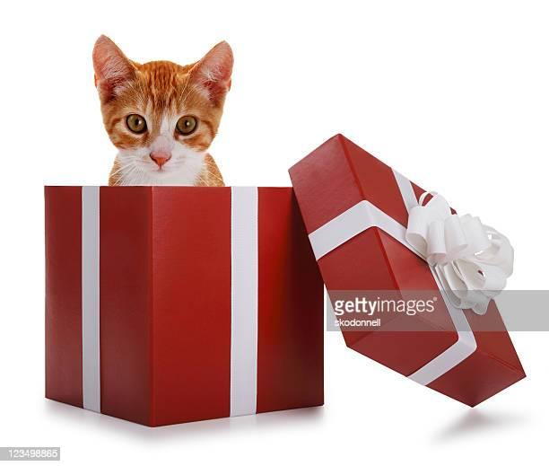 Kitten in a Present Box