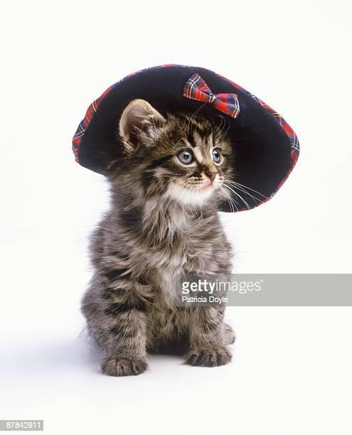 Kitten in a velvet hat