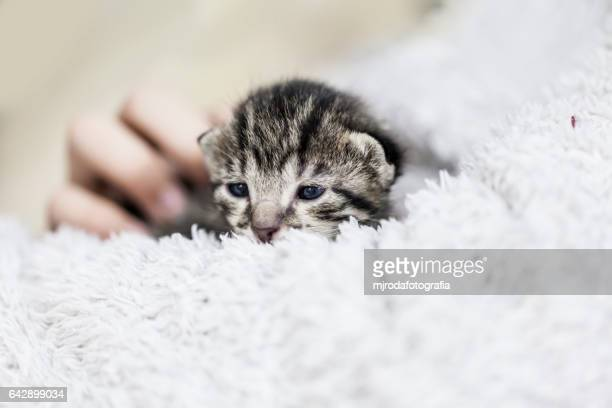 kitten in arms - mjrodafotografia fotografías e imágenes de stock