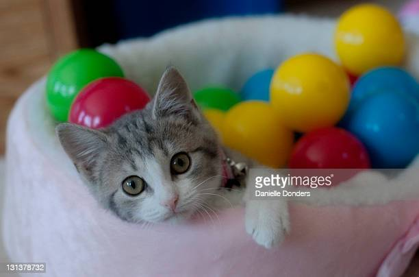 Kitten in cat bed with colourful balls