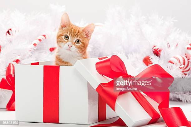 Kitten in christmas gift box