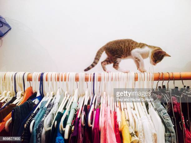 Kitten in Closet Balancing on Hangers With Colorful Clothing