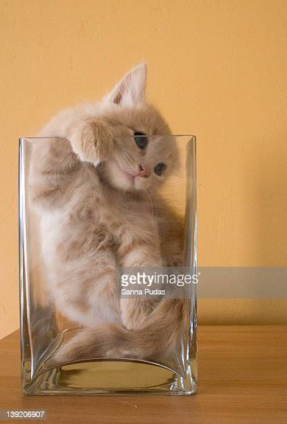 Cats In Vases Stock Photos And Pictures Getty Images
