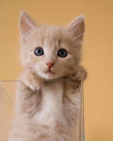 Kitten In Glass Vase Photos