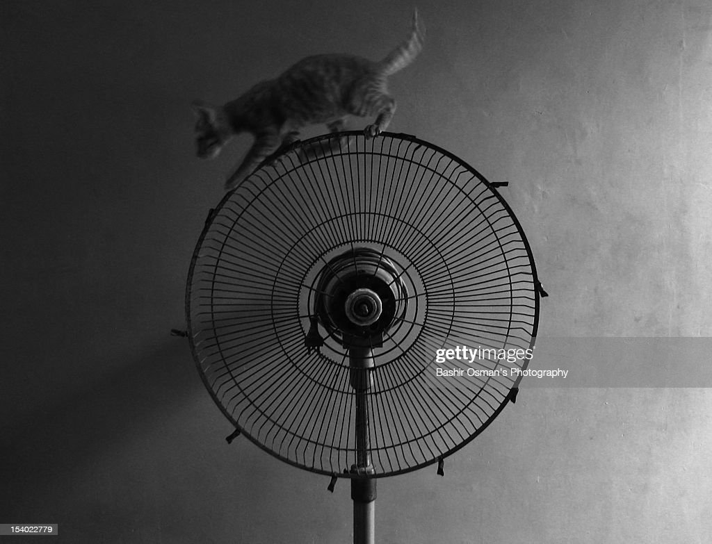 Kitten in suspension : Stock Photo