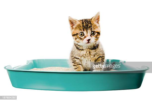 kitten in the litterbox - litter box stock photos and pictures