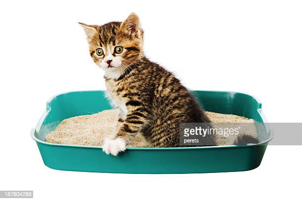 kitten in the tray - litter box stock photos and pictures