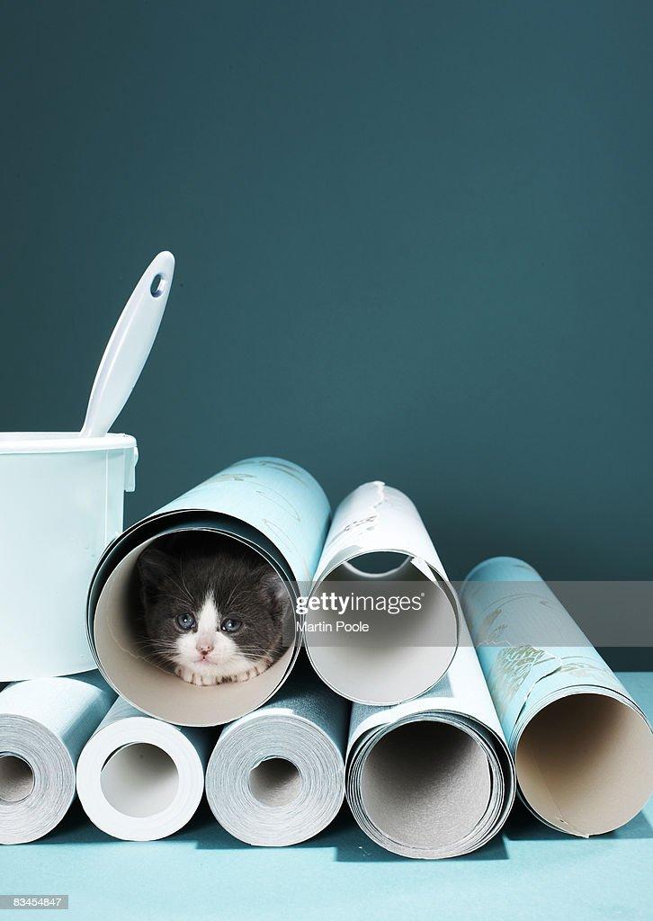 Kitten in wallpaper tube : Stock Photo