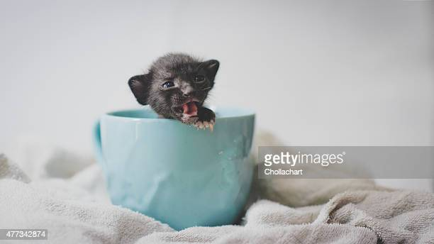 A black kitten is in blue cup and she's calling you.