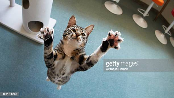 A kitten jumps on the blue carpet.