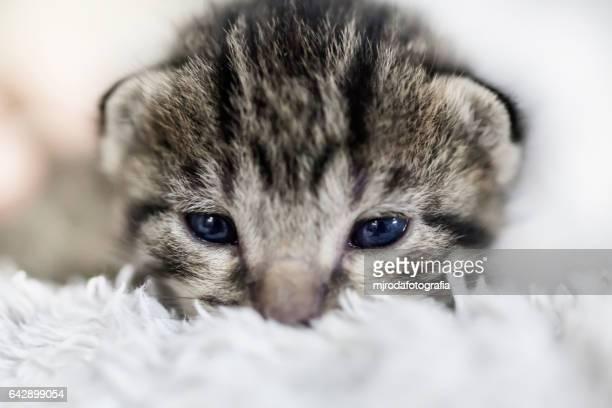 kitten looking at camera - mjrodafotografia fotografías e imágenes de stock