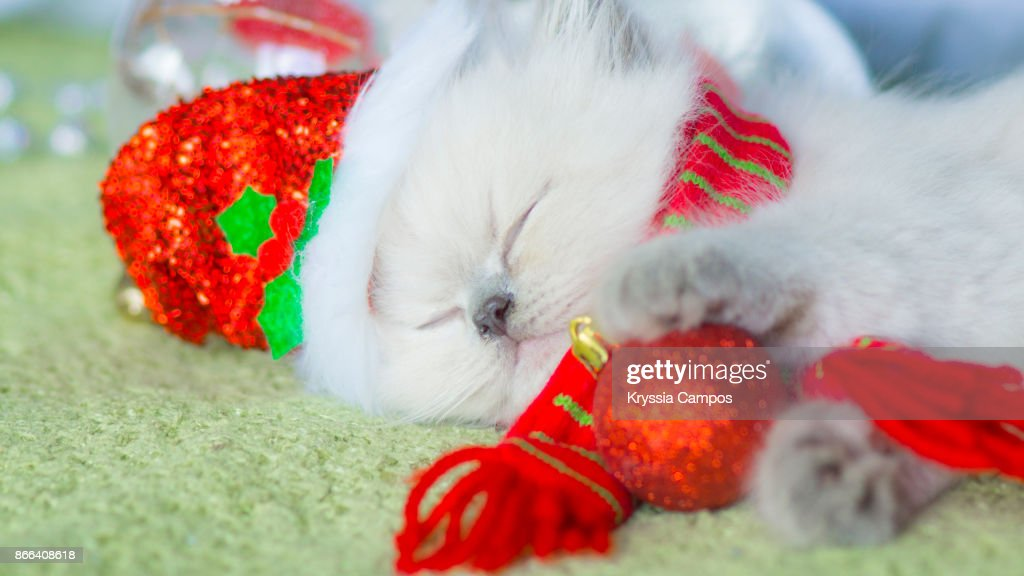 Kitten looking out of Santa hat getting a nap : Stock Photo