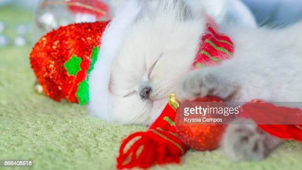 Kitten looking out of Santa hat getting a nap