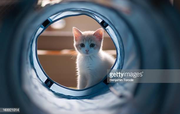Kitten looking through blue plastic tunnel