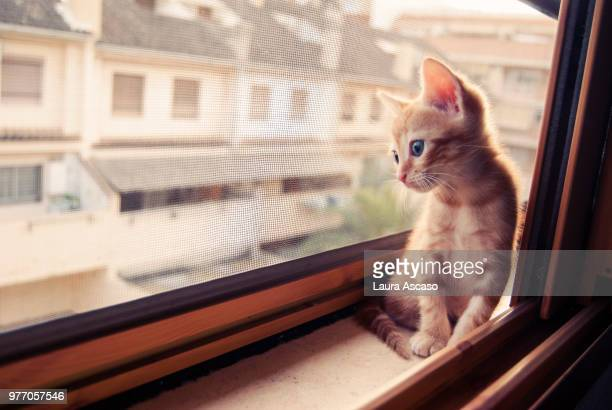 kitten looking through window, paterna, valencia, spain - mosquito net stock photos and pictures