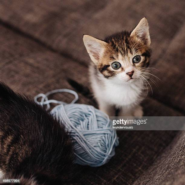 Kitten looking up next to ball of yarn on couch