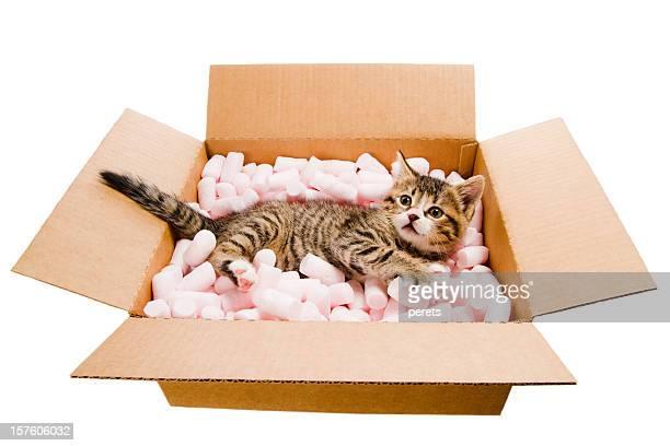 Chaton allongé dans la boîte