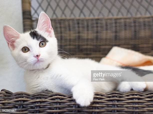 Kitten lying on bench