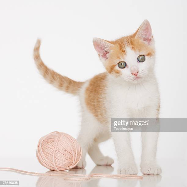 Kitten next to ball of string