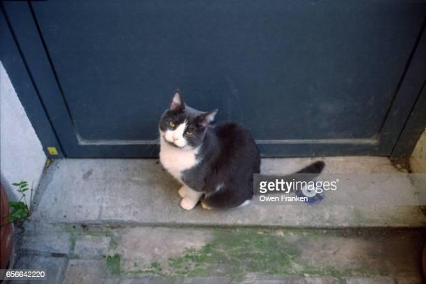 kitten on a doorstep