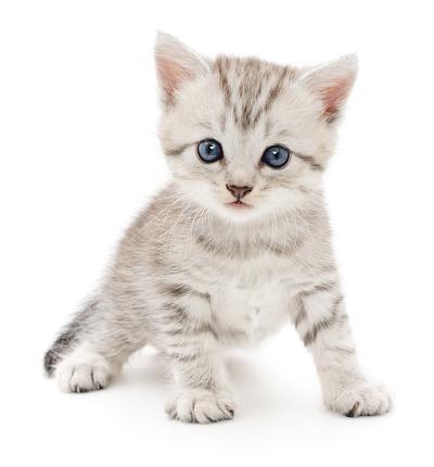 Kitten on a white background 511458158