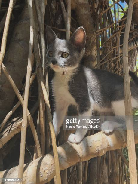 kitten on branch - universidad stock pictures, royalty-free photos & images