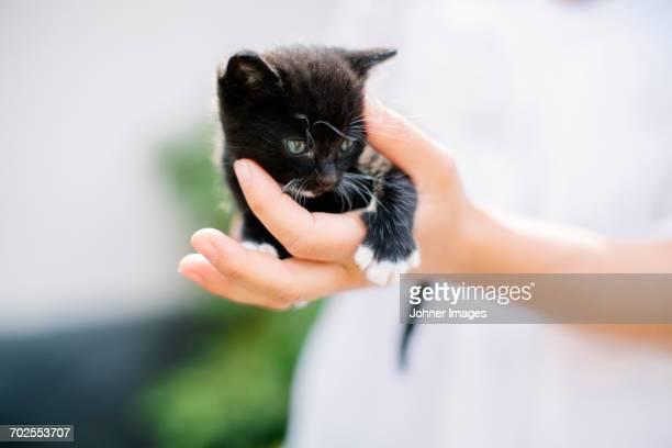 Kitten on hand