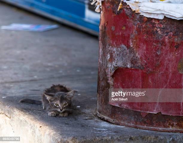 kitten on the street