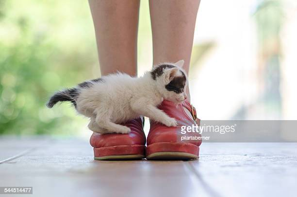 Kitten over Red Shoes