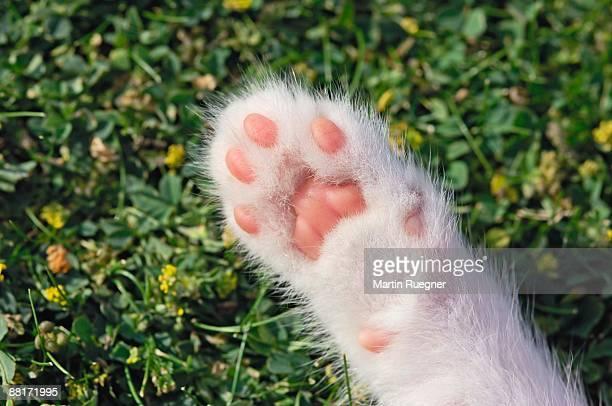 kitten paw - 動物の足 ストックフォトと画像