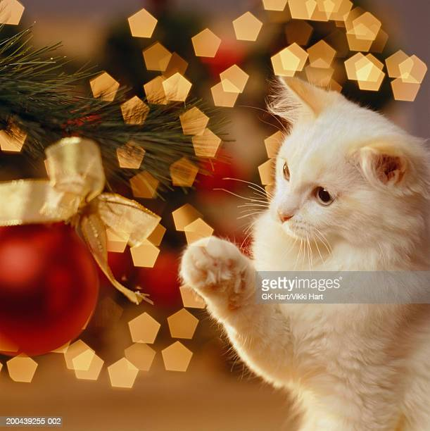 kitten pawing at christmas ornament on tree - christmas kittens stock pictures, royalty-free photos & images
