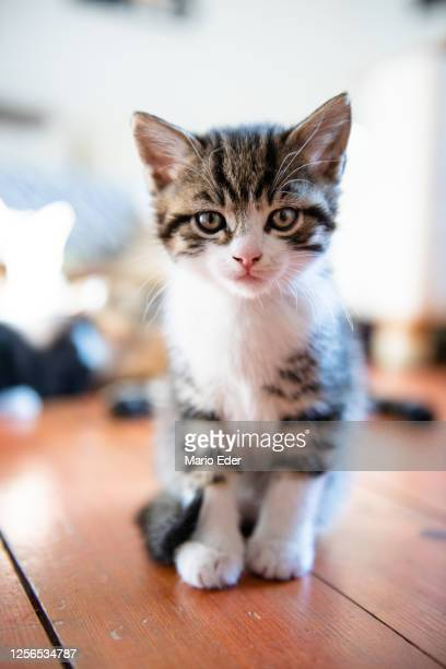 kitten - kitten stock pictures, royalty-free photos & images