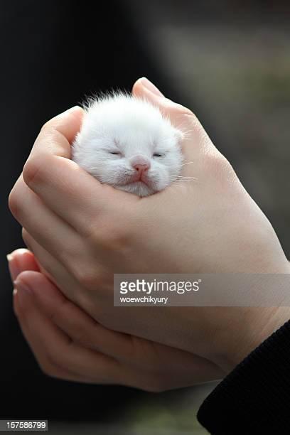 micio - gattini appena nati foto e immagini stock