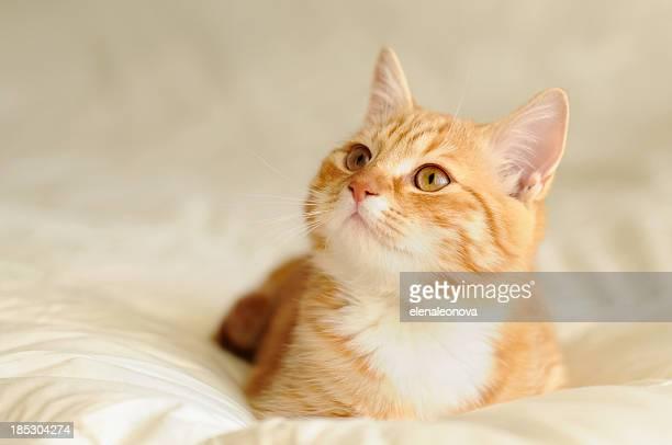 chaton - chat roux photos et images de collection
