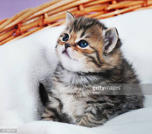 kitten - loops7 stock photos and pictures