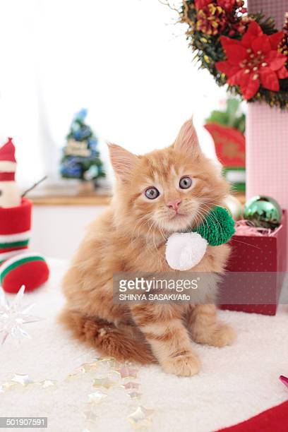 kitten - christmas kittens stock pictures, royalty-free photos & images