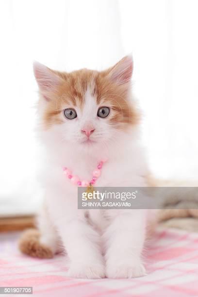 kitten - 一匹 ストックフォトと画像