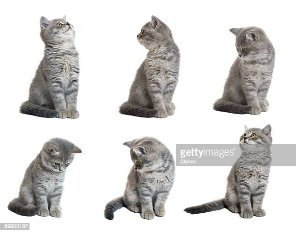 kitten - cat face mask stock pictures, royalty-free photos & images