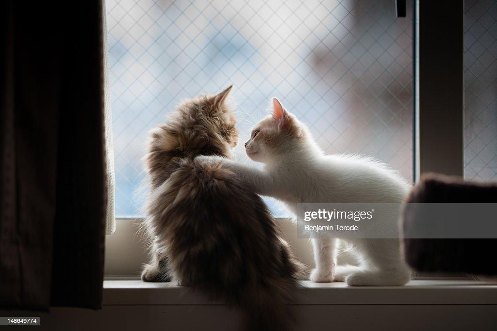 Kitten placing paw on other kitten : Stock Photo