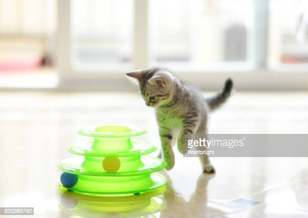 kitten play with a cat toy - cat's toy stock pictures, royalty-free photos & images