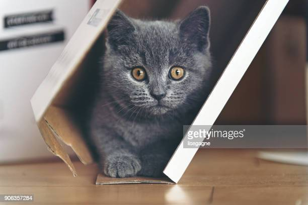 Kitten playing in a cardboard